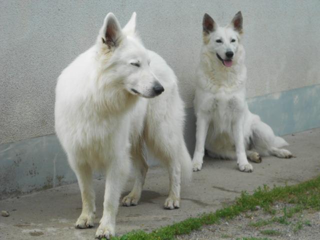 Diabolo et Dzanackh