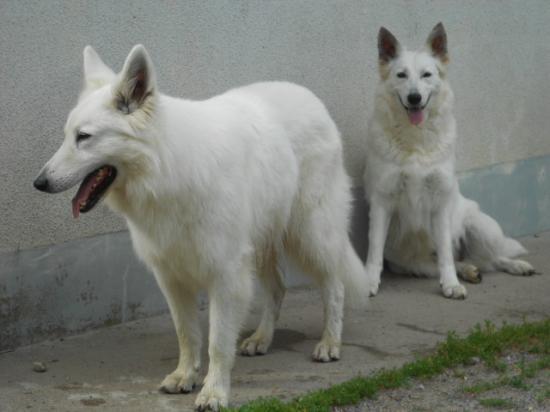 Dzanackh et Diabolo