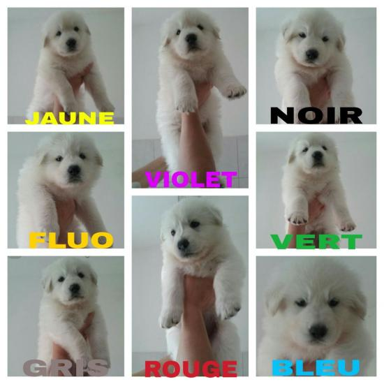 photos chiots